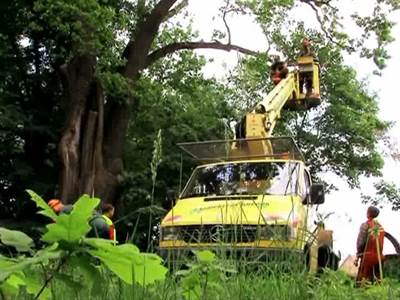 Baumpflege Gregor