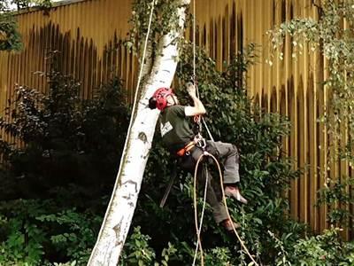 Baumpflege Weserland