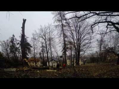 Seilpol Baumdienst Baumkletterer